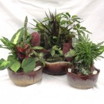 "Brown Ridge Dish Gardens - 8"", 10"" & 12"""