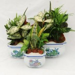 "Blue Flower Square Dish Gardens - 6"", 8"" & 10"""