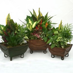 "Braided Square Dish Gardens - 6"", 8"" & 10"""