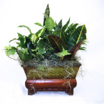 Flourish Trim Rectangle Dish Garden - 10""