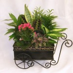 Flower Cart Dish Garden – 10″