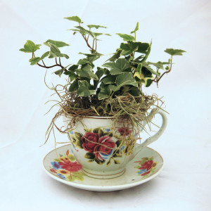 Teacup Planter - ivy & moss