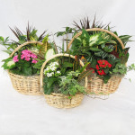 "White Willow Basket Gardens - 9"", 10"" & 12"""